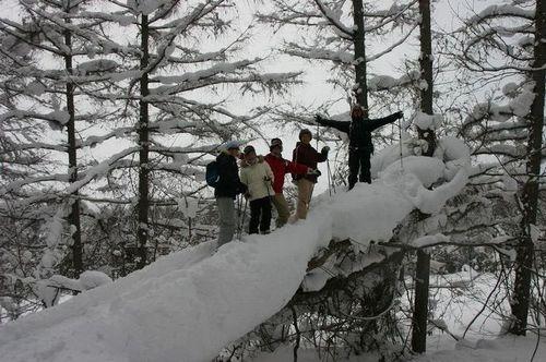 スノーシュー倒木の上
