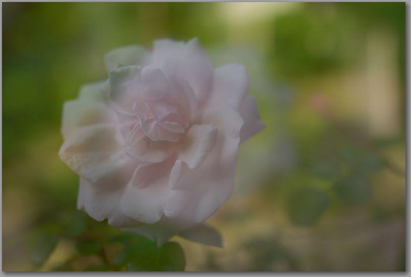 Dsc_34042018hiroshi_2