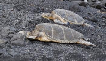 2010-hawaii-4301