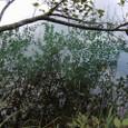 世界遺産・ブリトヴィツェ湖面